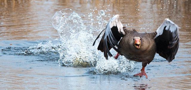 Canada Goose Soars after Surprise Q4 Profit